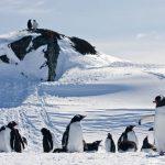 טיסות טראנסאטלנטיות? מעתה אמור טיסות טראנסארקטיות