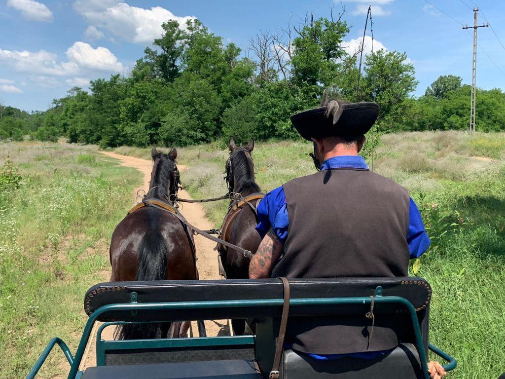 נוסעים בכרכרה הרתומה לסוסים בחוות לאזאר. צילום דורון ישועה