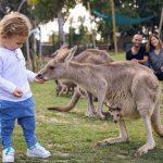 בישראל מתגייסים להצלת בעלי החיים באוסטרליה