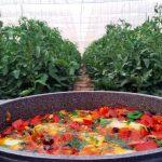 פסטיבל אוכל כפרי במטה יהודה חוגג 20 שנות תיירות קולינרית
