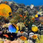 קבינט הקורונה צפוי להכריז היום על אילת כאי תיירותי