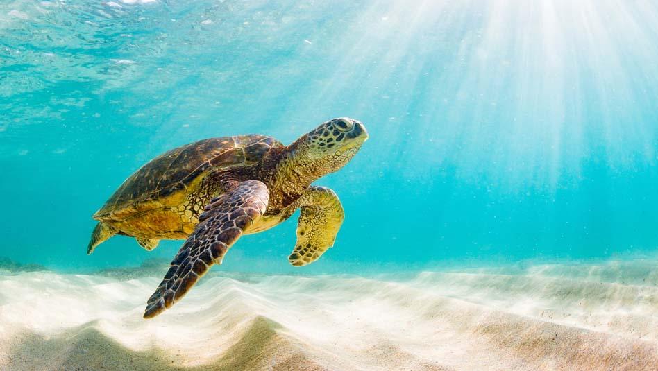 שייט באיים הקריביים. צילום iStock