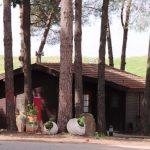 תאגיד תיירותי משותף בחלקים שווים לקיבוץ אורטל וניר דוד