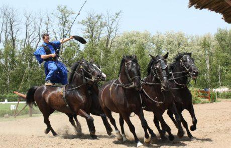בין בודפשט לדברצן: טוק טוק, ספא וסוסים שמבינים הונגרית