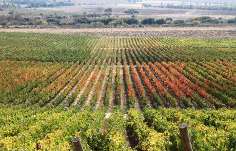 הוועידה העולמית הרביעית לתיירות היין התכנסה בצ'ילה
