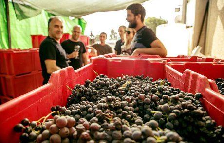 ביקב הבוטיק בהט בעין זיון היין מופק באופן ידני מסורתי