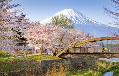 בגלל ההתחממות הגלובלית המוני תיירים יחמיצו את פריחת הדובדבן ביפן