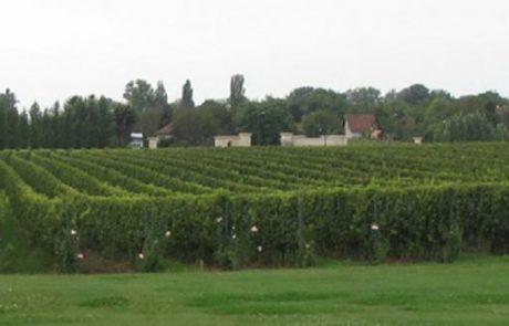 גרמניה, זה גם יין משובח