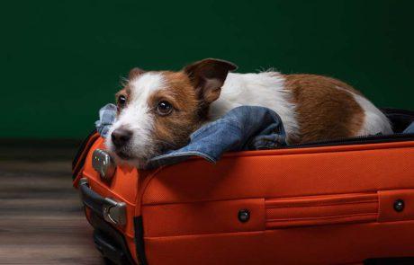 דלתא איירלינס מעדכנת את מדיניות חיות תמיכה רגשית בטיסותיה