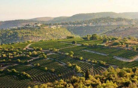 הוגשה בקשה להכרה במטה יהודה כחבל יין עולמי